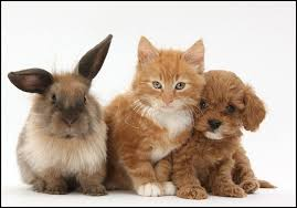 kittens and puppies and bunnies and hamsters. Fine Hamsters Puppies And Kittens Bunnies Hamsters T