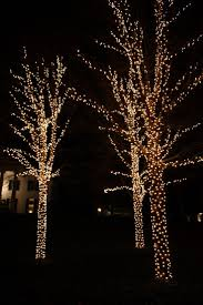 lighting outdoor trees. light wrapped outdoor trees cindy jespinoza lighting