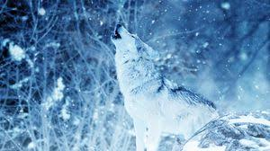 Download, share or upload your own one! Wolf Tablet Laptop Wallpapers Hd Desktop Backgrounds 1366x768 Images And Pictures