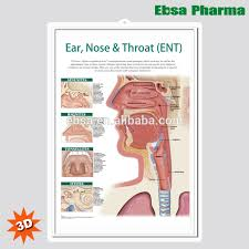 3d Medical Human Anatomy Wall Charts Poster Ear Nose And Throat Ent Buy 3d Chart Human Anatomy Wall Poster Ear Nose And Throat Ent Product
