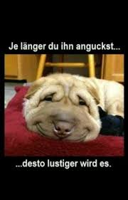 Lustige Bilder Und Sprüche Hunde Wattpad