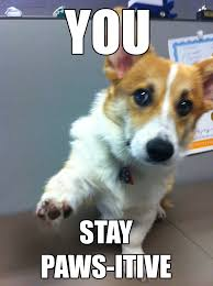 motivational office pictures. office corgi motivational posters pictures