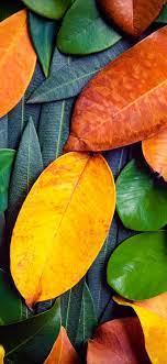 Many leaves, green and orange 1125x2436 ...