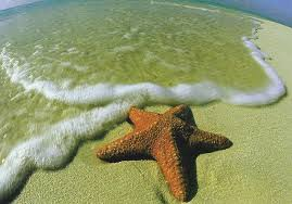 the starfish story one step towards changing the world  the