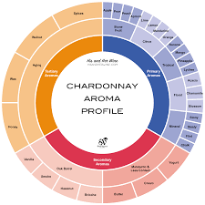 wine aging chart infographics guide to chardonnay wine grape variety social