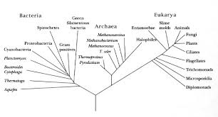 The Procaryotes