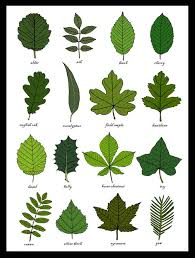 Leaves Identification Print Wall Art Chart Botanical Leaf Art Print Unframed