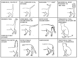 Cat Body Language Chart 7 Signs Your Cat Is Truly Happy Cat Tail Language Cat