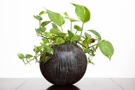 feng shui feng shui plants best feng shui plants how to feng shui best low light office plants