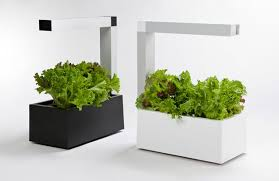indoor hydroponic vegetable garden. Why-hydroponic-plants-grow-faster-garden-herbie Indoor Hydroponic Vegetable Garden