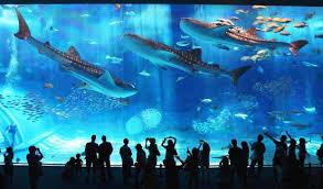 aquarium office. Okinawa-aquarium-photograph Aquarium Office