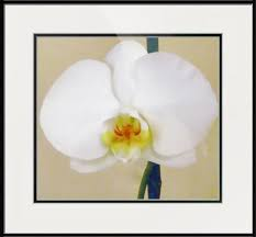 prints posters canvas framed wall art from independent artists at imagekind white orchidsframed  on white orchid framed wall art with white orchid by lillianhibiscus single white orchid buy