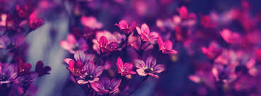 beautiful flowers cover photos for facebook timeline for girls.  Timeline Beautiful Purple Flowers Facebook Cover Intended Photos For Timeline Girls