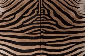 contemporary zebra rug with black felt backing and leather piping for