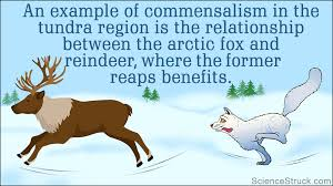 symbiotic relationships symbiotic relationships in the tundra