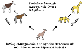 Anagenesis And Cladogenesis Definitions And Differences