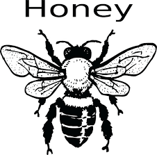 Image result for free pics of honey bees