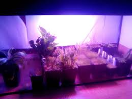 diy led lighting. 10 DIY Led Grow Lights For Growing Plants Indoors - Home And Gardening Ideas Diy Lighting