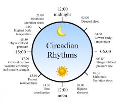 How To Stay In Tune With The Rhythm Of Nature Body Clock