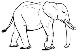 Small Picture African Elephant Coloring Pages Coloring Coloring Pages