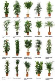 great office plants. Common Office Plants Great R