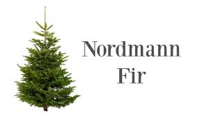 Ordinary What Type Of Tree Are Christmas Trees Part  8 Christmas Types Of Fir Christmas Trees