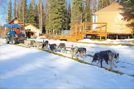just short of magic sled dog rides fairbanks alaska
