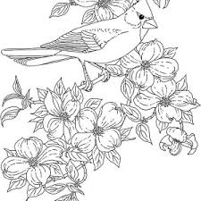 Small Picture Cardinal Bird Cardinal Bird And Blossom Flower Coloring Page