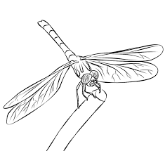 Small Picture FREE Dragonfly Coloring Page 1