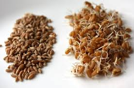 Sprouting Chart And Guidelines Better Raw