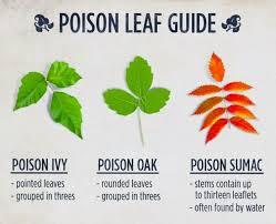 Hotsticks Poison Leaf Identification Guide