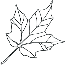 jungle leaves printable template fall colouring pages coloring holly of leaf oak poinsettia
