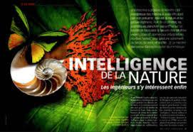 Afbeeldingsresultaat voor biomimetisme