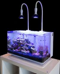 reef aquariums made easy with friendly reef aquarium forumore at reef forums