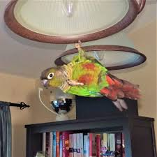 12 quick easy diy bird toys to beat boredom these homemade bird toy ideas