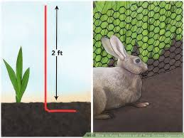 how do i keep rabbits out of my garden. Beautiful Rabbits How To Keep Rabbits Out Of My Garden 3 Ways Your Intended Do I O