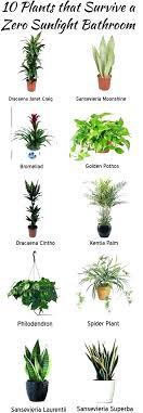 good indoor plants for low light best indoor plants low light no sunlight plants a indoor