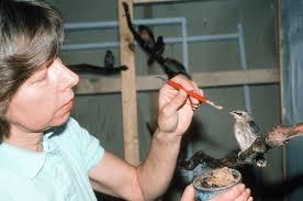 In Memoriam: Diane Soucy « Conserve Wildlife Foundation of New Jersey