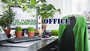 office indoor plants. Plants For Office Indoor
