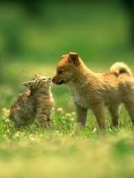 ad a whal a kiss