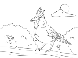 Perched Northern Cardinal Coloring Page Free Printable Coloring Pages