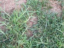 Identifying Grass Rome Fontanacountryinn Com