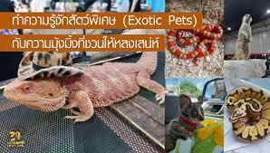 สัตว์เลี้ยงชนิดพิเศษ (Exotic Pets) อยากเลี้ยงต้องทำอย่างไร รู้อะไรบ้าง