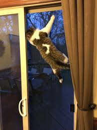 cats screen door on twitter my cat got stuck between the glass door and the screen