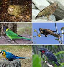 <b>Parrot</b> - Wikipedia