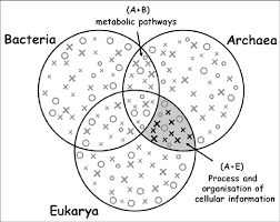Three Domains Of Life Venn Diagram Phyletic Patterns Of Conserved Proteins From The Three
