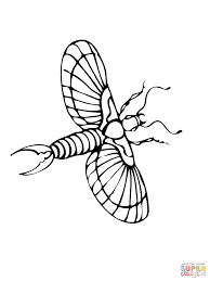Small Picture Earwig Animal Coloring Pages Click The Striped Earwig To View