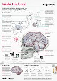 Free Anatomy Posters Download Anatomical Poster