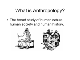 Image result for the study of humans