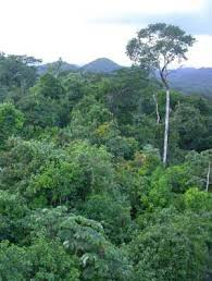 защитный результат реферат на тему лес легкие нашей планеты Введение Обоснование выбора темы реферата Основн